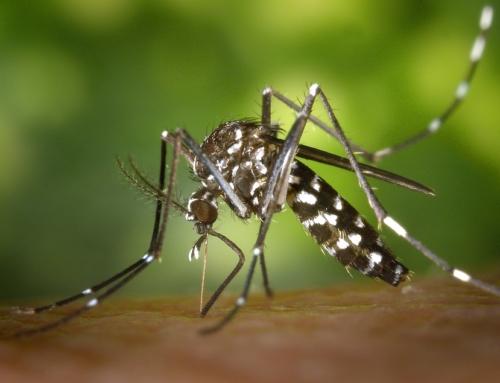 Información de la OMS para viajeros a países afectados por el Zika